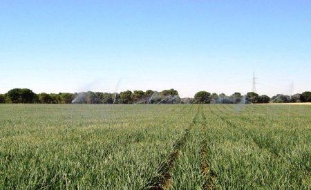 Masa de Aguas subterráneas Campo de Cva contará con un local en Almagro