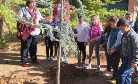 200 escolares de 2º de Primaria celebran en Manzanares el Día Mundial Forestal con la plantación de árboles