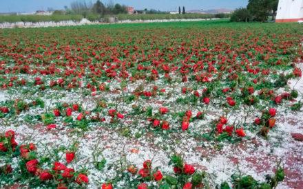 El granizo causa grandes daños materiales y agrícolas en Infantes