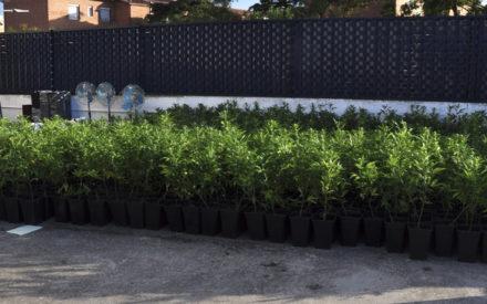 La Policía Nacional incauta más de 2.000 plantas de cannabis en Ciudad Real