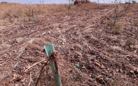 Se pide declarar zona de emergencia cinegética parte del Campo de Montiel