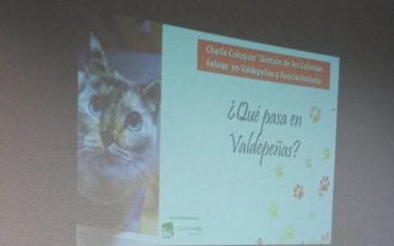 IU Valdepeñas ha convocado una charla sobre colonias felinas