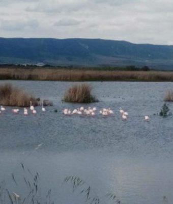 La Comisión Mixta de Gestión de los Parques Nacionales de CLM acuerda reactivar el bombeo de agua a las Tablas de Daimiel