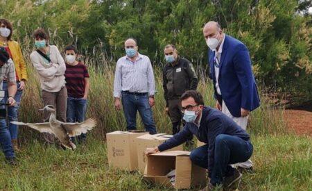 Se reintroduce la especie 'cerceta pardilla' en la Reserva natural del Complejo Lagunar de Alcázar de San Juan