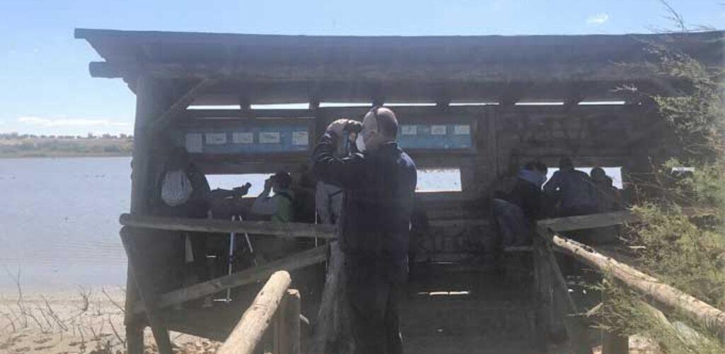 El Gobierno de CLM conmemora el Día de las Aves con visitas guiadas al entorno de la Laguna de Navaseca en Daimiel